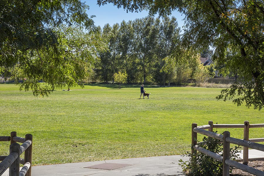 Person walking dog in large grassy area of park with tall trees.
